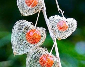 Physalis Alkekengi Chinese Lantern Plant Ornamental Medicinal Herb 100 Seeds #1164