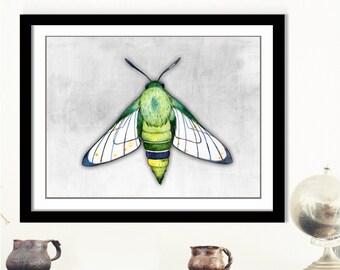 Green Grey Moth Art - Butterfly Artwork, Moth Art Print, Moth Wall Decor, Digital Moth Download, Digital Moth Art, Pink Insect Art, 3d Art