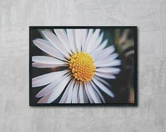 Daisy Flower, Daisy Print, Flower Photo, Wall Art Printable, Instant Download, Modern Art, Digital Print