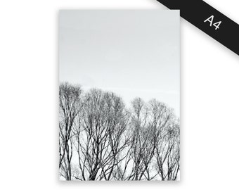 Trees - art print/photo print A4