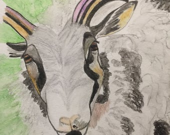 Icelandic sheep - original watercolor