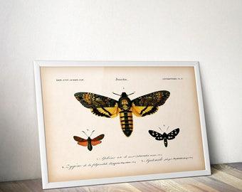 Vintage insect print, 8x10 insect print, 11x14 insect print, Moth print, Wall art, Printable art, Insect illustration, Entomology art, JPG