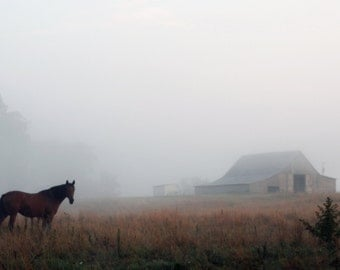 Foggy Morning Horses  and Barn II Photograph Print