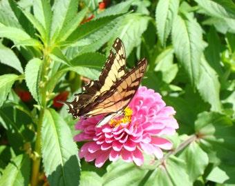 Enjoying some nectar