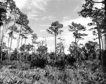 Florida Hammock