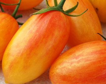 Blush - Bicolor tomato seeds