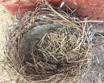 Real birds nest big bird nest robins nest bird nest