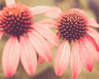 Echinacea Canvas Gallery Wrap, Flower Photos, Wall Art, Fine Art Photography