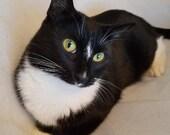 "Download ""Catittude"" Photo, Black Cat, Cat Eyes, Cat Picture, Cat Photo for Sale"