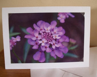 Photo Card, Photo Greeting Card, Photo Note Card, Flower Note Card, Flower Greeting Card, Birthday Card, Mothers Day Card
