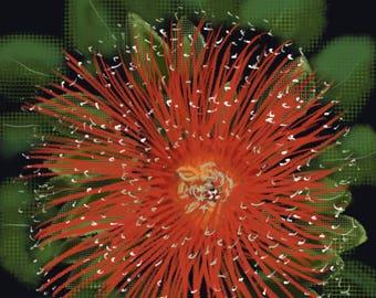 Pretty Cactus Flower
