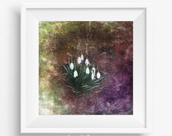 Snowdrops picture, boho home decor, printable picture, winterbells photography, flower photography, Schneeglöckchen, campanillas de invierno