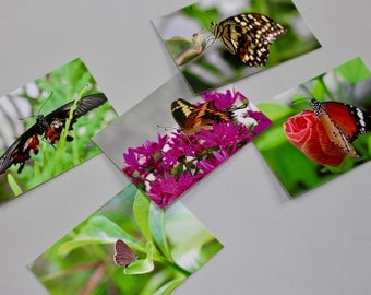 Set of five (5) A6 blank glossy butterfly postcards