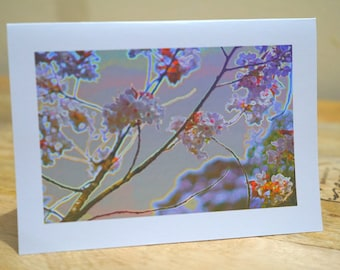 White Leura Flowers - Blank Card / All Occassion Card with Envelope