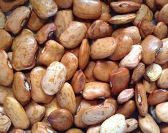 Haricot Dolloff - Phaseolus vulgaris - Bean Dolloff