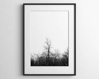 Tall Tree Black & White Fine Art Photography Giclée Print, Wall Art, Nature Print, Wall Decor, Tree Photograph
