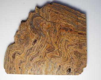 SQUIRREL TAIL STROMATOLITE jasper rough lapidary slab