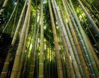 Bamboo Temple Garden