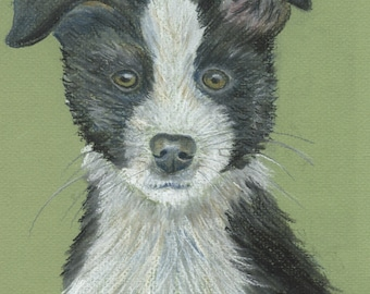 Aceo, Art trading card Border Collie Puppy dog done in pastels reproduction print
