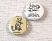 Chinchilla Pinback Button Set