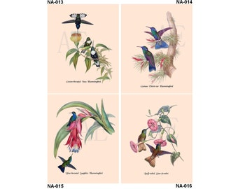 NA013-016 Artistic Ephemera Nature Print - One 8x10 or Two 5x7s - Gould's Hummingbirds Inca, Violet-ear, Sapphire, Buff-tailed Star-frontlet