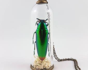 Jewel Beetle Terrarium Necklace,Specimen Jewelry,Insect Specimen,Chrysochroa fulminens,Insect Necklace,Terrarium Jewelry,Scientific Gift