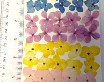 Item #JHFLP128 - SMALL Real pressed flowers-jewelry making - 40 hydrangeas, 48 white pear flowers + 40 tiny leaves + fern - 128 PIECES