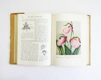 1930's Biology Book // Vintage Student Science Textbook // Vintage Home Decor