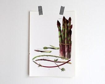 Vintage Print, Asparagus, Book Plate, 1965, Gallery Wall, Unframed Bookplate, Vegetable Garden Botanical