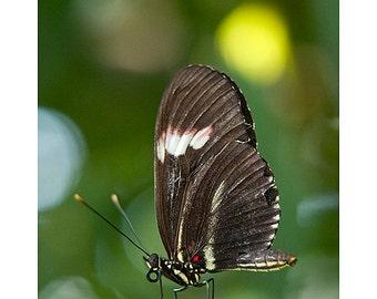 """Butterfly Photo - Butterfly Art - Nature Photography - Green Art - Close Up - Home Decor - Wall Art - Art Print - """"Butterfly"""""""