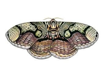 Brahmin Moth Print 8x10