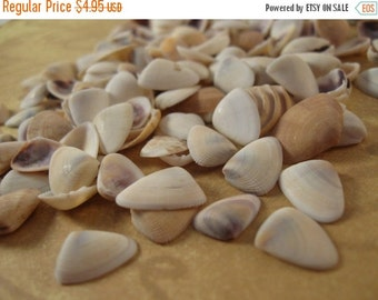 ON SALE Shell Cabochons, Clam Shell, No Hole, Triangle, White (PN100)