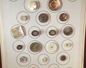 24 Mother of Pearl Buttons on a Collector Card