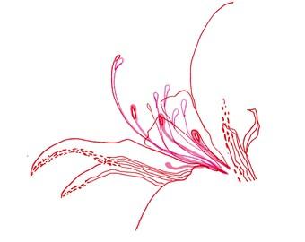 minimalist watercolor print: Flower Sex