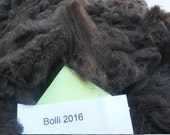 Fleece, Whole Purebred Cormo Fleece (Bolli's 2016)