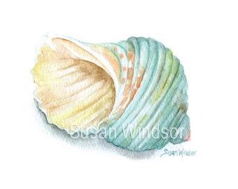 Green Turbo Seashell Watercolor Painting - Giclee - 10 x 8 - Summer Beach Painting - 11 x 8.5 Turquoise Aqua