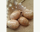ON SALE Deer Cowrie Sea Shell Supplies Perfect for Crafting, Decorating, Jewelry Making, Weddings, Jewelry, Fillers, Mirrors Frames Art Craf
