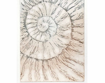 Original ammonite fossil zinc etching no.49 jurassic Dorset coast fossil spiral fossil ammonites golden section