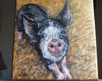 Cover Pig 8x8 Original Painting berkshire 8 x 8 Acrylic