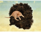 Wool Cat Bed Sheep-friendly Felted Fleece Pet Bed - Brown Shetland - Supporting American Small Farms - Ready to Ship