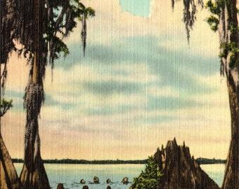 Cypress Gardens, Florida, Esther Williams, Diving Scene - Linen Postcard - Postcard - Unused (JJJ)