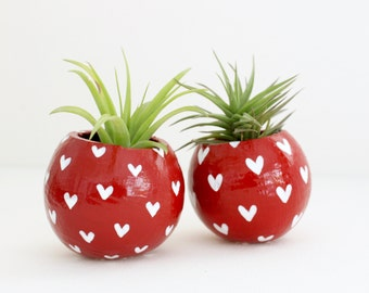 Air Plant Planter with Air Plant - Red with White Hearts.