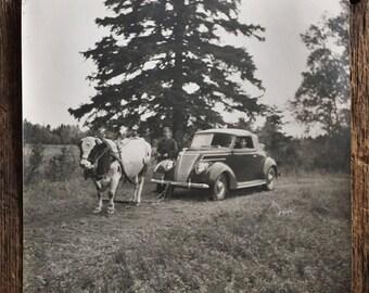 Large Original Vintage Photograph Cow Drawn Car