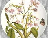 1600's botanical artwork III melamine plate