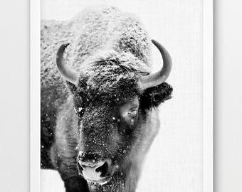 Bison Print, Bison Photo Print, Woodlands Wild Forest Animals Art, Nursery Wall Art, Black White Photography, Kids Room Printable Decor Art