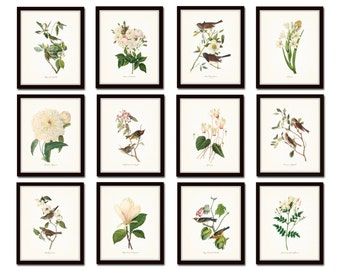 Bird and Botanical Print Set No. 10, Audubon Bird Prints, Botanical Prints, Bird Prints, Gallery Wall, Print Sets, Illustration, Giclee, Art