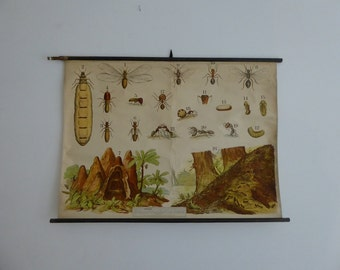 Antique Ants Insect Art Pull Down Chart -  Antique Ant School Chart Lithograph - Large Bugs Lithograph Print 1910