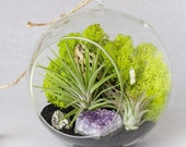 Terrarium Kit Amethyst Cluster and Pyrite Air Plant Terrarium Kit  || February Birthstone || Gifts for Her || Birthday Gift || Airplant
