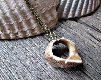 Sea Shell Necklace- Seashell Pendant- Oxidized Brass Chain- Ocean Beach Jewelry- Coastal Jewelry- Sea Shell Jewelry - Gift for Sister Mom