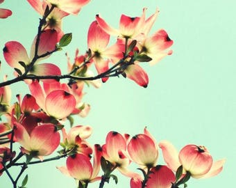 Dogwood Blossoms - Flowering Tree - Pink Dogwood - Floral Wall Decor - Nature Flower - Pink Spring - Elegant Flower - Nature Photograph